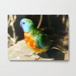 Scarlet-chested Parrot ( splendida ) Metal Print