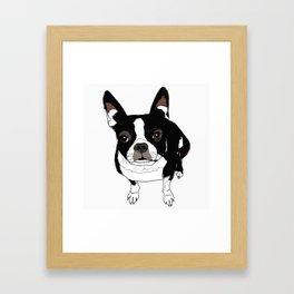 Boston Terrier Cutie Framed Art Print
