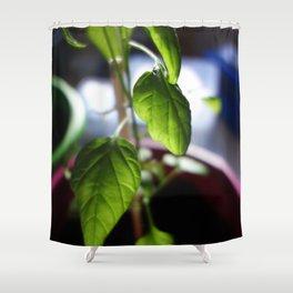 Sunlit Serrano Shower Curtain
