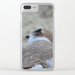 Snowy Plover Scan Clear iPhone Case