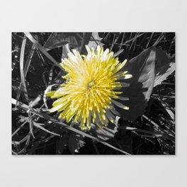 Photo  Canvas Print