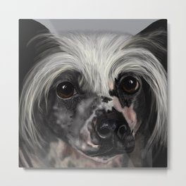 Chinese Crested Up Close Metal Print