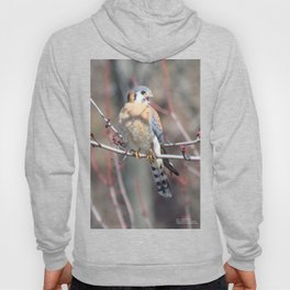 Angry Sparrowhawk (Kestrel) 4 Hoody