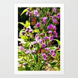 Monarch Butterfly Couple Art Print