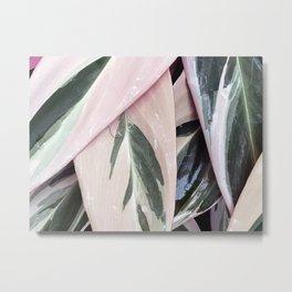 pink & green #1 Metal Print