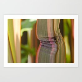 Pleated leaves  Art Print