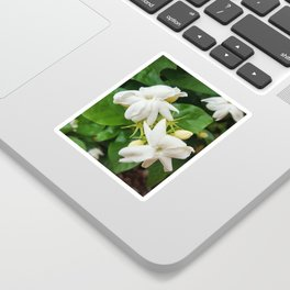 sampaguita Sticker