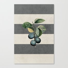 botanical stripes - plums Canvas Print
