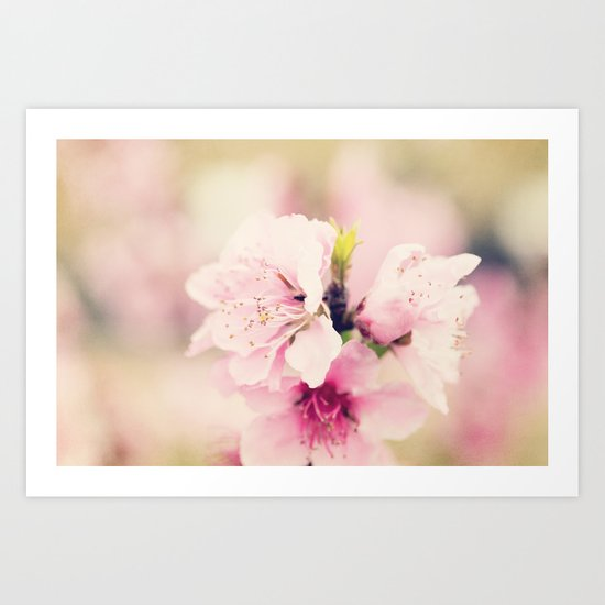 Pink Pear Blossoms 1 Art Print