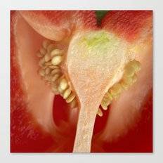 red pepper macro II Canvas Print