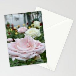 Soft Rose & Company Stationery Cards
