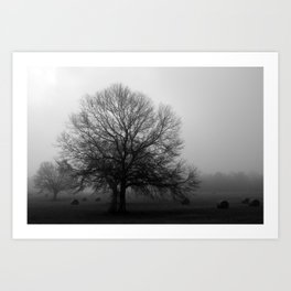 Field of Trees in Black and White Art Print