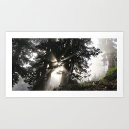 the light Art Print