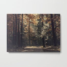 Autumn light and rays - horizontal Metal Print