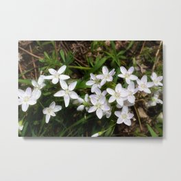 Spring Beauty 10 Metal Print
