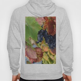 Grapes Ripening In The Vines Hoody