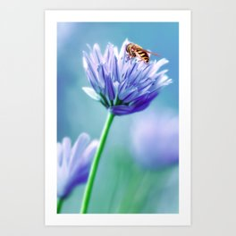 Hoverfly 48 Art Print