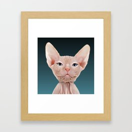 Sphynx Kitten II Framed Art Print