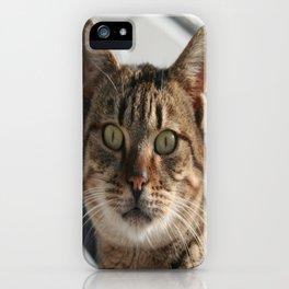 Beautiful Eyed Tabby Cat  iPhone Case