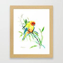 Sun Conure Parakeet, tropical yellow green bird decor Framed Art Print