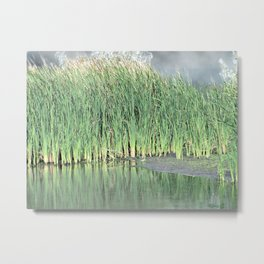 Marshes Metal Print