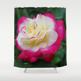 Double Delight Rose - Red and cream beauty Shower Curtain