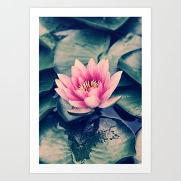 Dreamy Waterlily Art Print