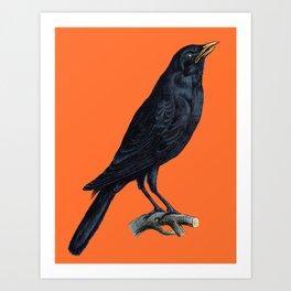 Vintage Raven Art Print