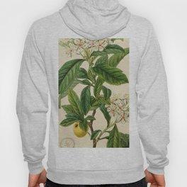 Edwards' botanical register 1836 Hoody