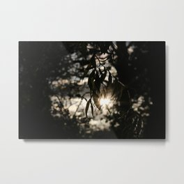 Dying Light of Spring Metal Print