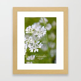 Coriander in flowers VI Framed Art Print