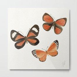 South American Butterflies Metal Print