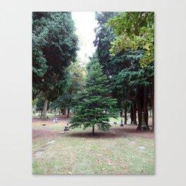 Cemetery tree, Oregon Canvas Print