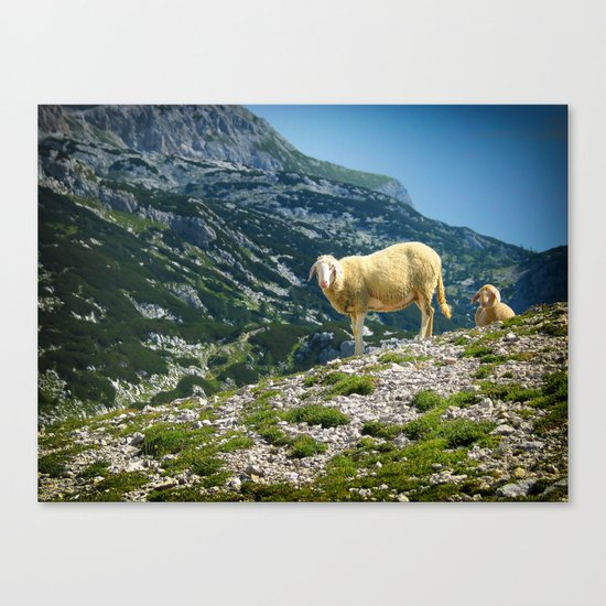 Sheep on the hill Canvas Print