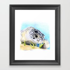 Sea Turtle Framed Art Print