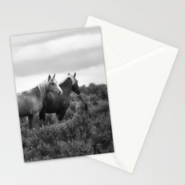 Palomino Buttes Herd - Wild Horses BW Stationery Cards