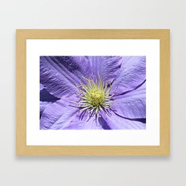 Clematis Flower Framed Art Print