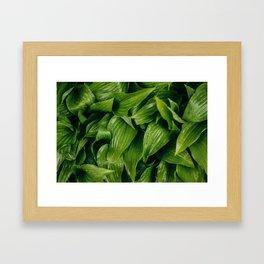 Some Leafy Stuff Framed Art Print