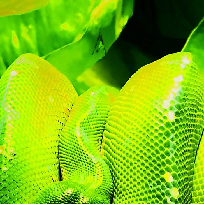 Sleeping snakes Leggings