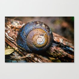 SNAIL ON THE TREE Canvas Print