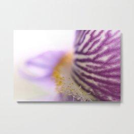 Purple Iris Petals and Yellow Stamen Macro Photography_2 Metal Print