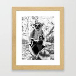 Lemur. Cool. Framed Art Print