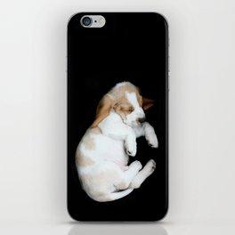 Basset Hound Puppy iPhone Skin