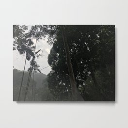 Forest in Malaysia Metal Print