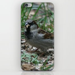 House Sparrow iPhone Skin