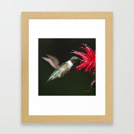 Hummingbird XV Framed Art Print