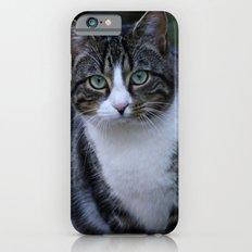 Green eyes cat Slim Case iPhone 6s