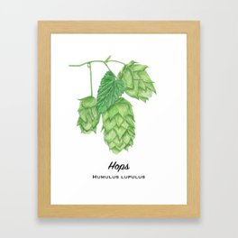 Beer Hops Botanical Painting Framed Art Print