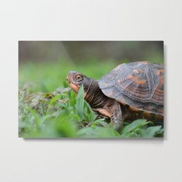 Box Turtle in the Garden Metal Print