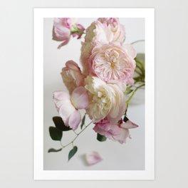 Still Life, Pale Roses Art Print